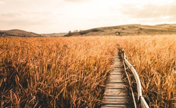Was verhindert emotionale Nähe? Der gefühlt weite Weg zu dir.